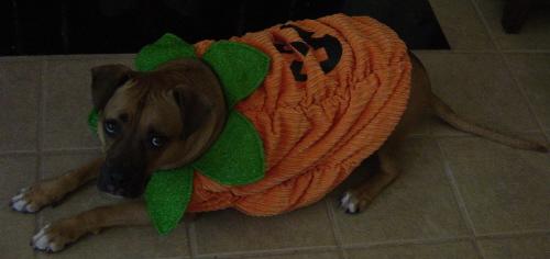 Bruiser Pumpkin 2