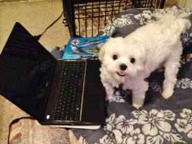 Writing assistant